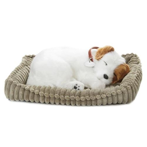 Picture of Precious Petzzz - Jimmy the Jack Russell