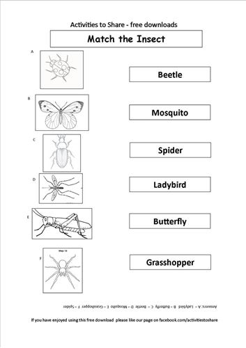 Picture of Match the Insect Activity