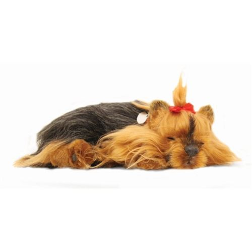 Picture of Precious Petzzz - Mollie the Yorkshire Terrier