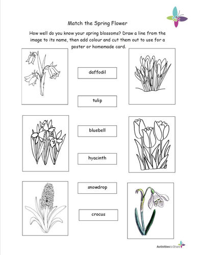 Picture of Match the Spring Flower